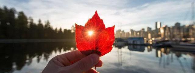 疫情期间加拿大移民不降反增?历年人口增长八成来自移民